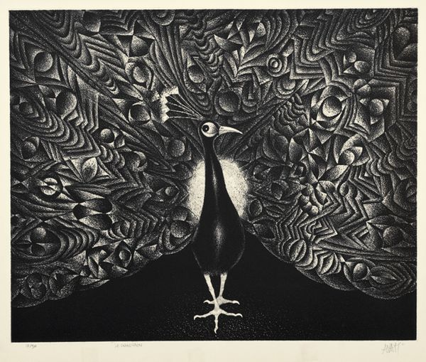 Mario Avati  Le Grand Paon  Michael Lisi / Contemporary Art  date1975  medium  mezzotint   edition size10  sheet size17 x 20 ½ inches