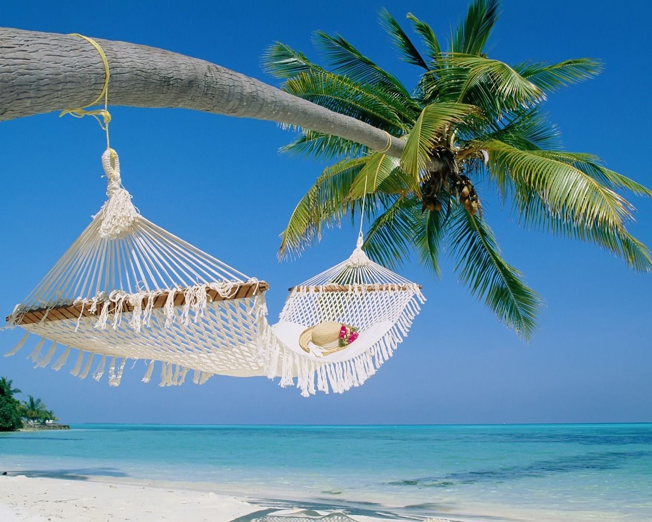 Hammocks on the beach - Find This Pin And More On The Good Life Hammock On The Beach