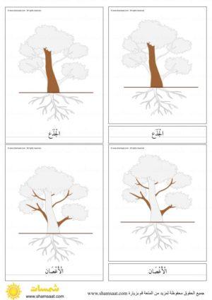 اجزاء الشجرة بطاقات مطابقة مكونة من ثلاثة أجزاء بزل الشجرة 2