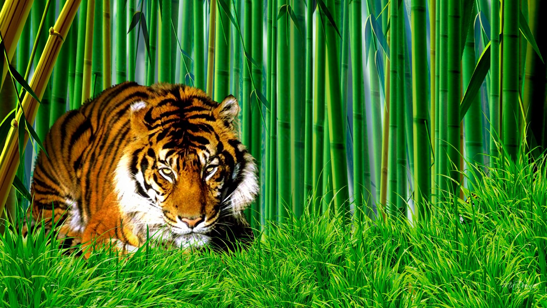 asian tiger in forest latest desktop wallpapers | hd wallpapers