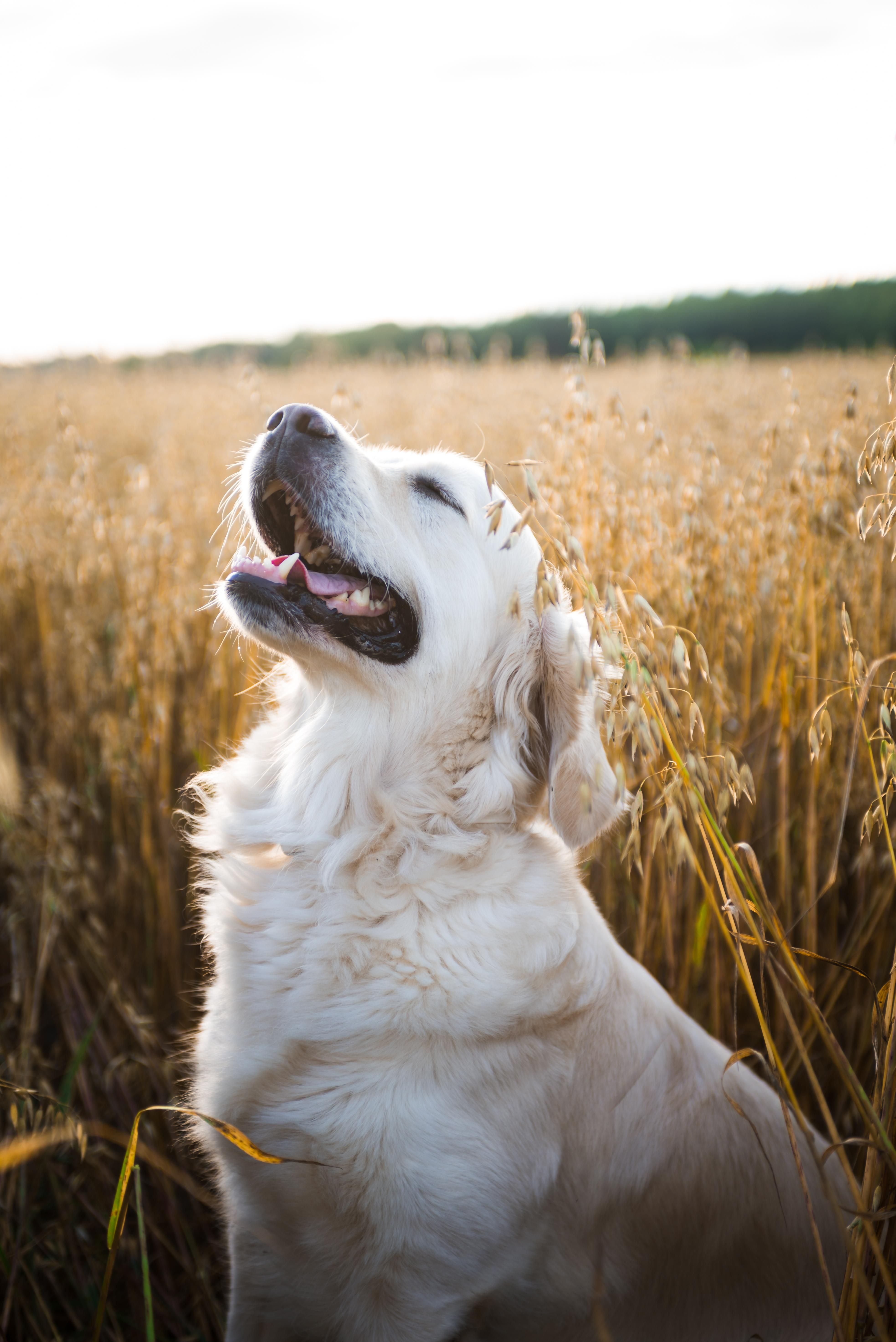 Reddit The Front Page Of The Internet Golden Retriever