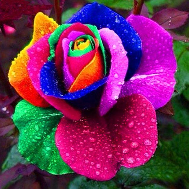 New 2018!200pcs/bag rare mixed COLORS rose garden rainbow rose flores bonsai flower plantas black rose rare balcony plant for #rainbowroses