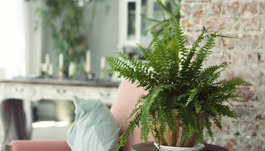 What To Do About Dusty Looking Mold On The Soil Of Houseplants Houseplants Plants House Plants