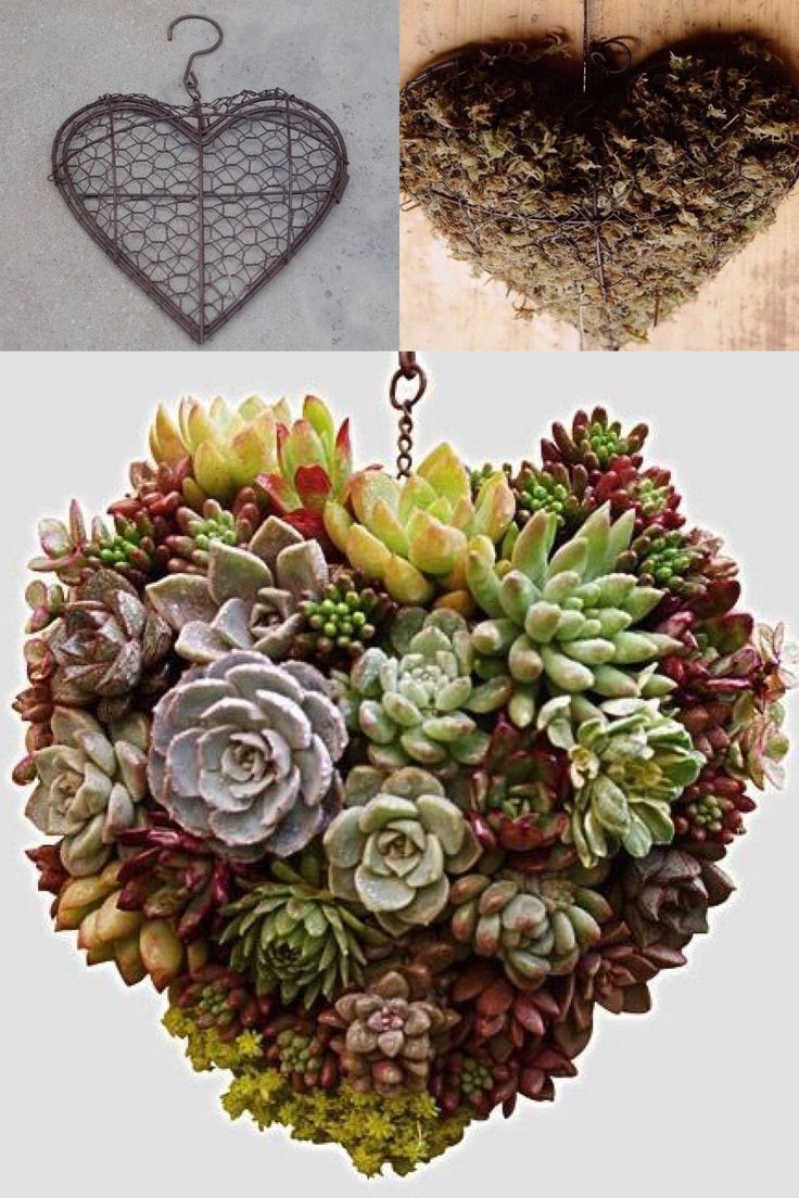 Heart Shaped Hanging Succulent Could Be A Wreath This Is The Most