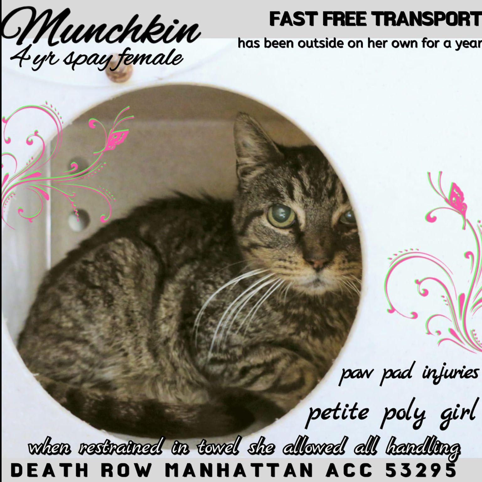 MUNCHKIN TO DIE 02/02/19 Cats, Foster cat, Cat help