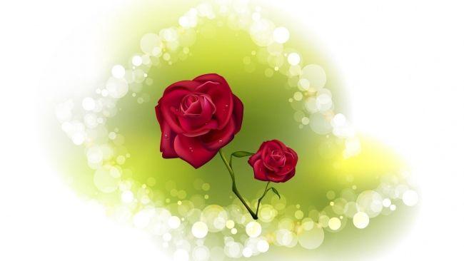 HD Hintergrundbilder rose blumen reflexion weinrot romantisch, desktop hintergrund