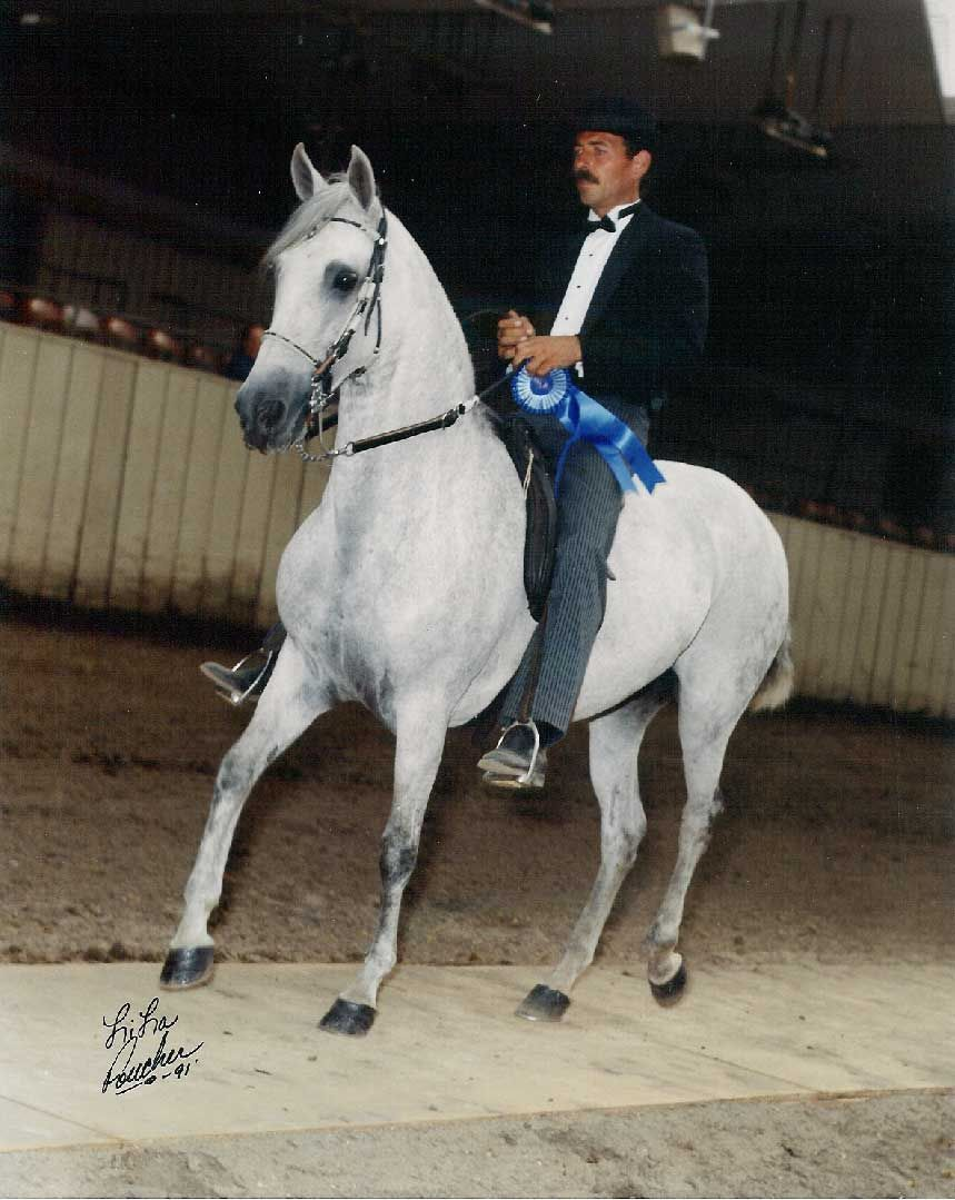 Johnny Lanier also a totally awesome Paso Fino horse trainer. He likes the spirited kind!!