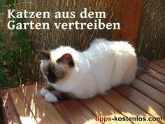 Katzen Vertreiben Aus Dem Garten 5 Tipps Die Helfen Katzen