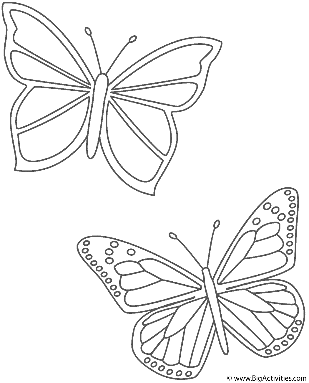 Coloring Page Butterfly Coloring Page Butterfly Drawing Coloring Pages [ 1300 x 1050 Pixel ]