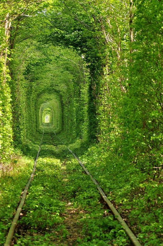 The lush green tunnel of love located in the forest of Kleven, Ukraine is so very fairytale-like. I can only imagine how amazing it must be to take an afternoon train ride through this lovely place via BeaWoodwell  The lush green tunnel of love located in the forest of Kleven, Ukraine is so very fairytale-like. I can only imagine how amazing it must be to take an afternoon train ride through this lovely place via  The lush green tunnel of love