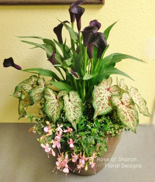 Mixed Planter With Calla Lilies Rose Of Sharon Floral Designs