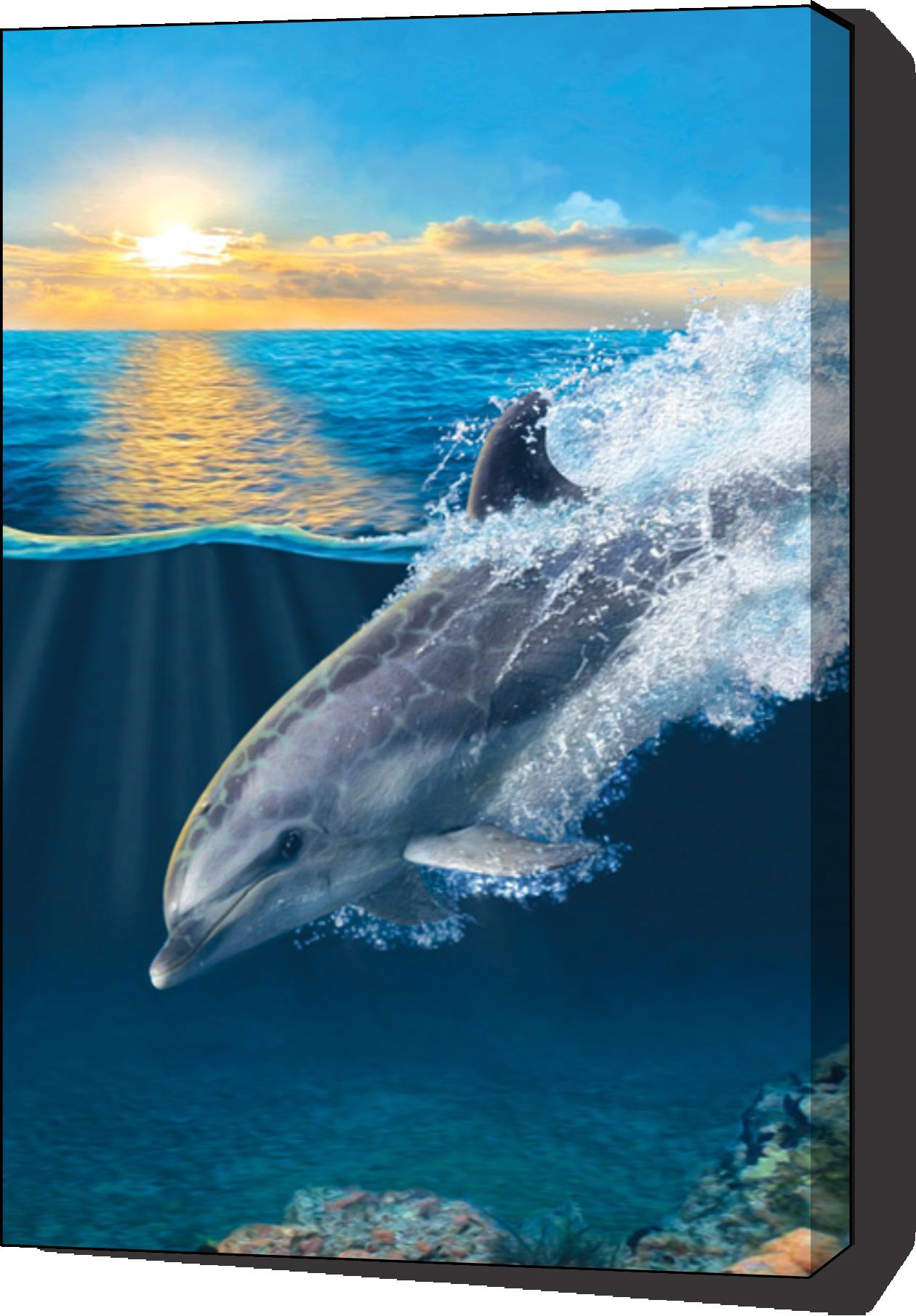 On Porpoise Dolphin Wall Art Print Ocean Creatures Ocean Animals Dolphin Art