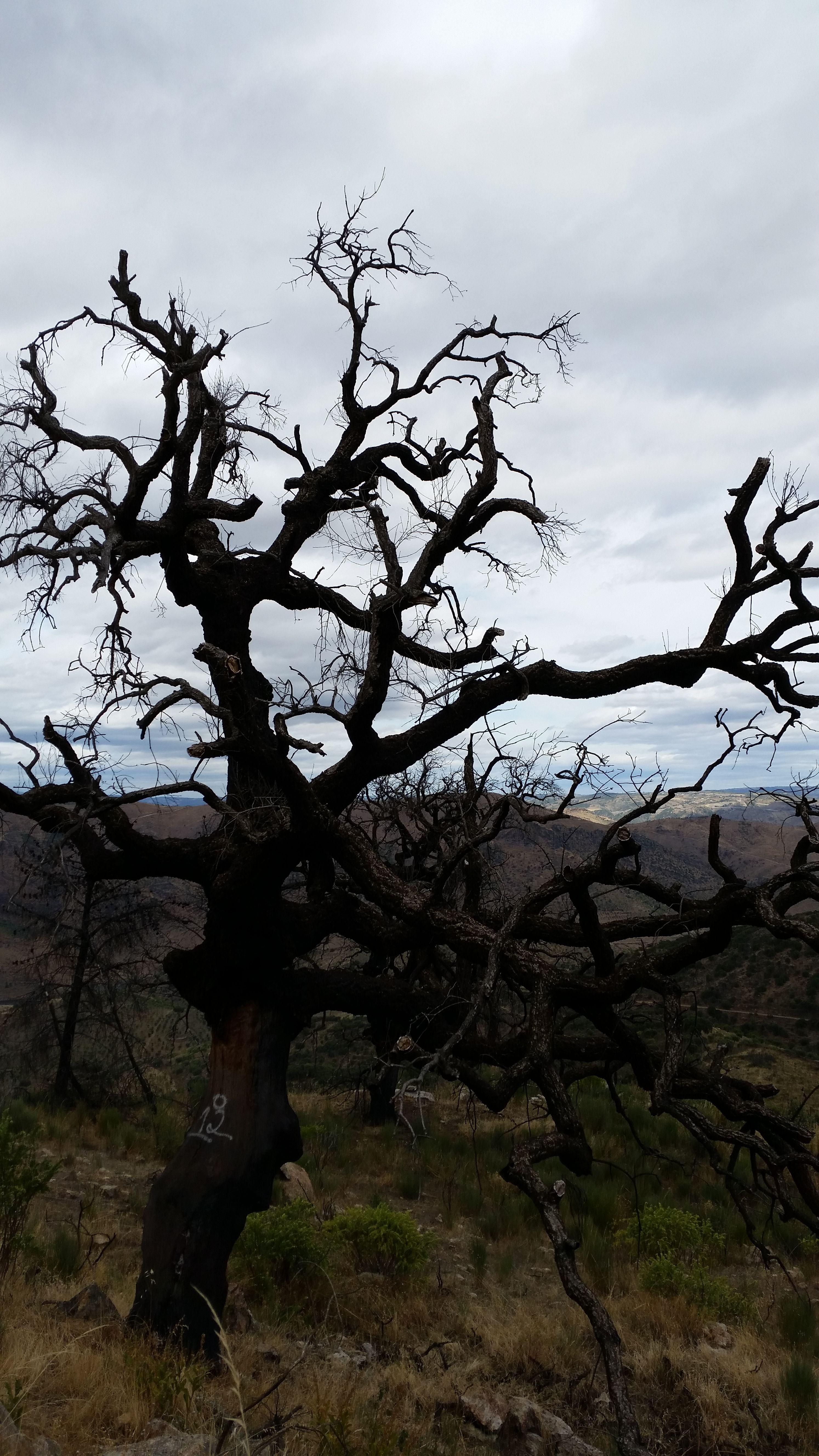As árvores morrem de pé, conservando até ao fim a sua dignidade.