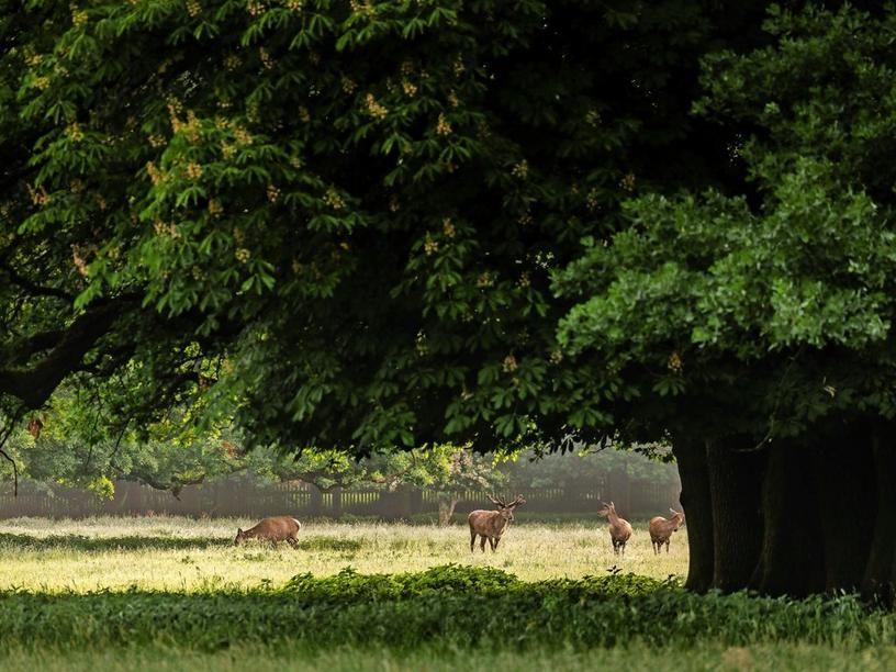 HANNOVER KIRCHRODE * TIERGARTEN (mit Bildern) Tiere