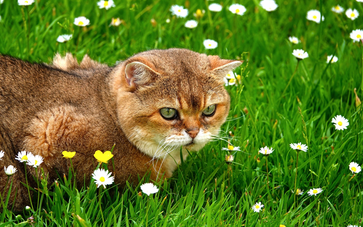 Download wallpapers ginger cat, green grass, cute animals