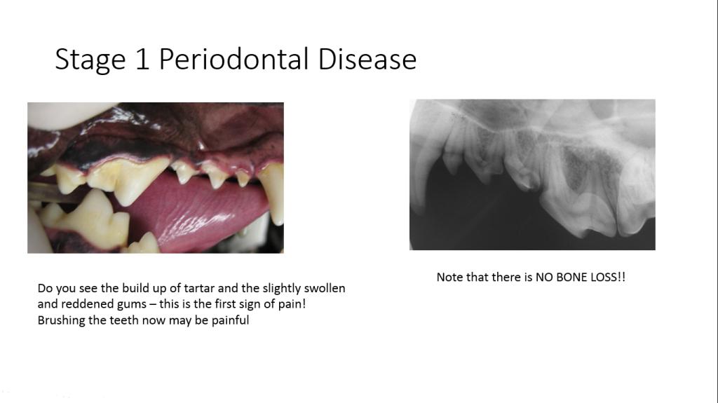 Stage 1 Pet Periodontal Disease Petdental Periodontitis Periodontal Disease Pet Dental Health