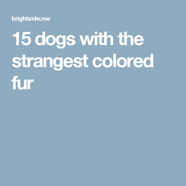 15 dogs with the strangest colored fur