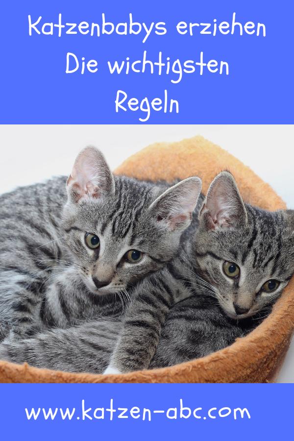 Katzenbabys Erziehen Die Besten Tipps Allgemeine Infos Katzenbabys Katzen Baby Katzen