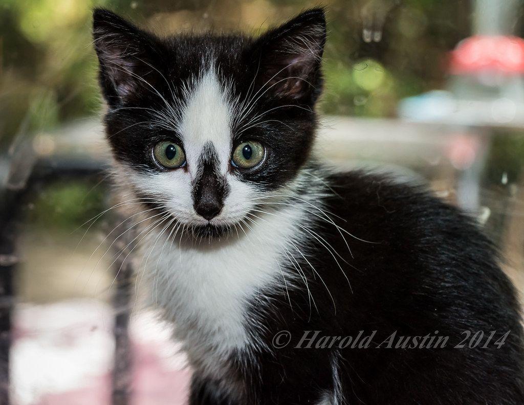 Kitten Puppy Su Sebili Squad Reddit 2020