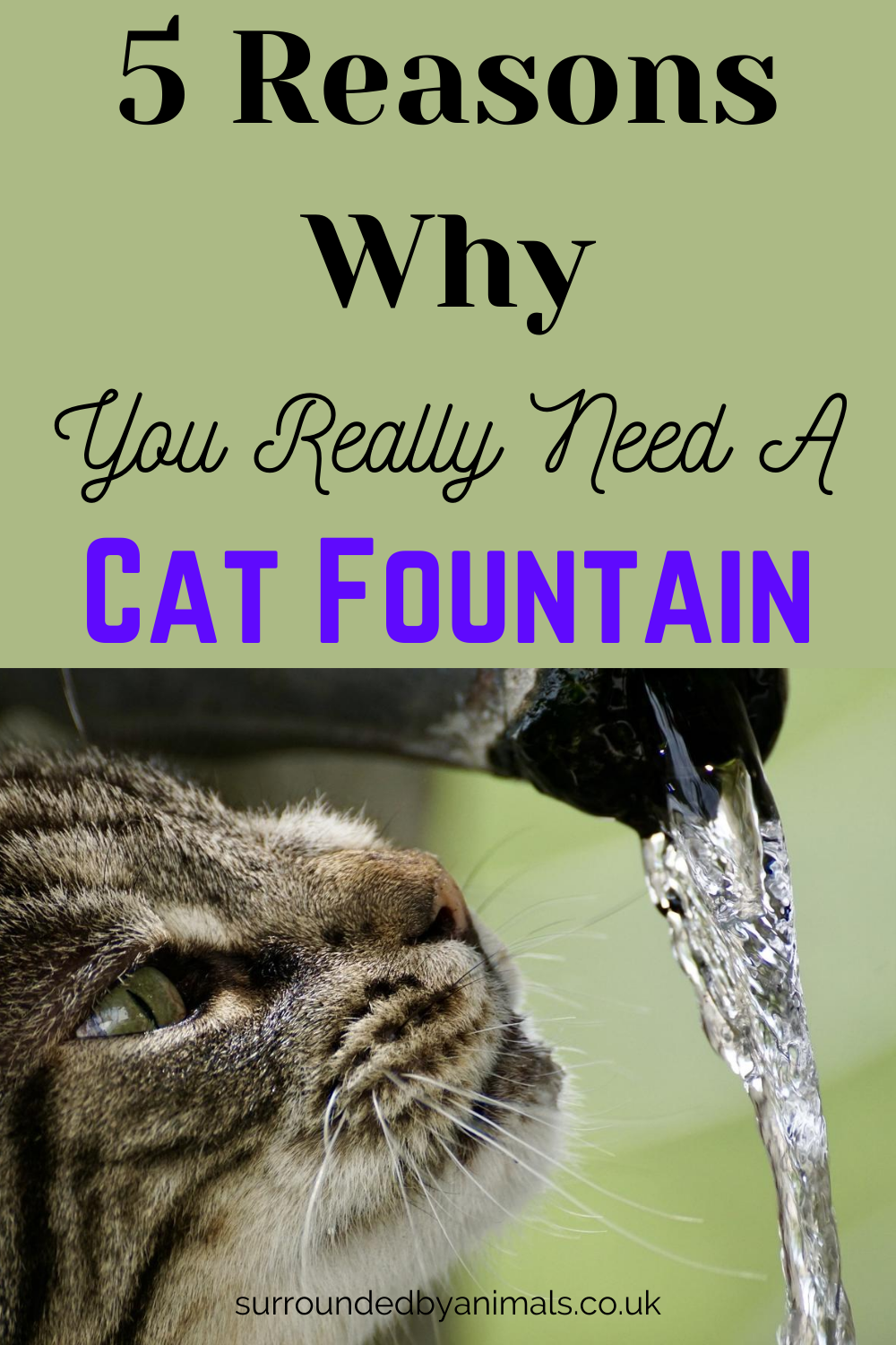 5 Reasons Why You Really Need A Cat Fountain Surrounded By Animals In 2020 Cat Fountain Cat Water Fountain Dog Water Fountain