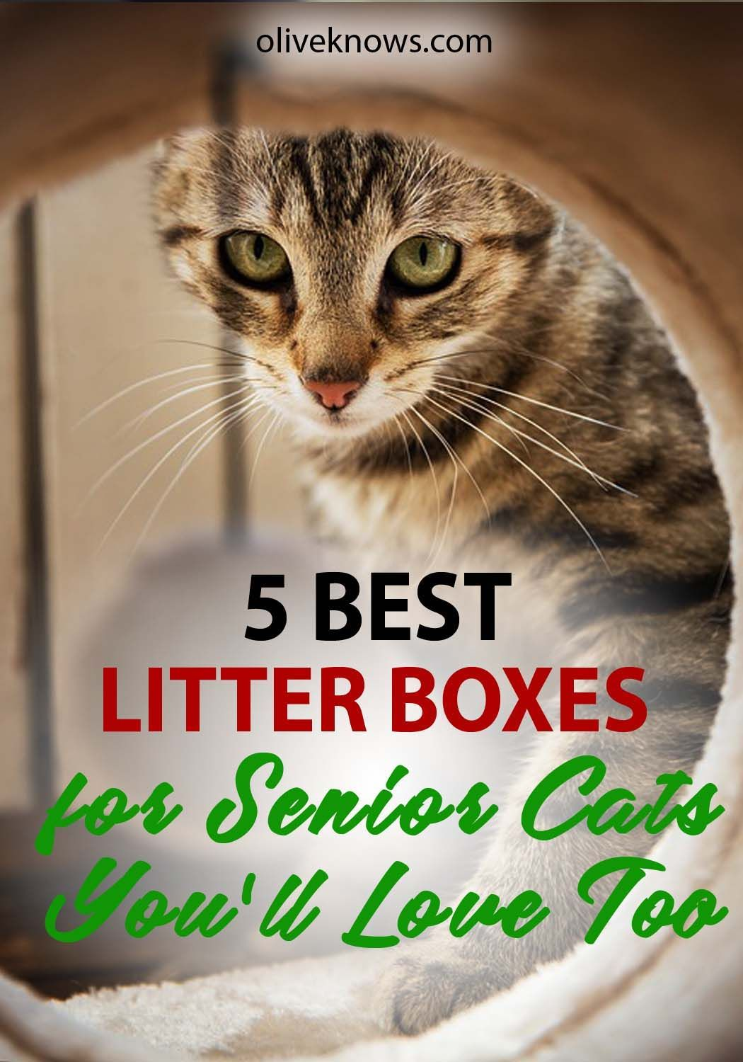 5 Best Litter Boxes For Senior Cats 2020 Guide Oliveknows Best Litter Box Cat Training Senior Cat