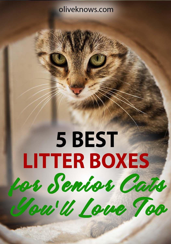 5 Best Litter Boxes for Senior Cats [2019 Guide] Best