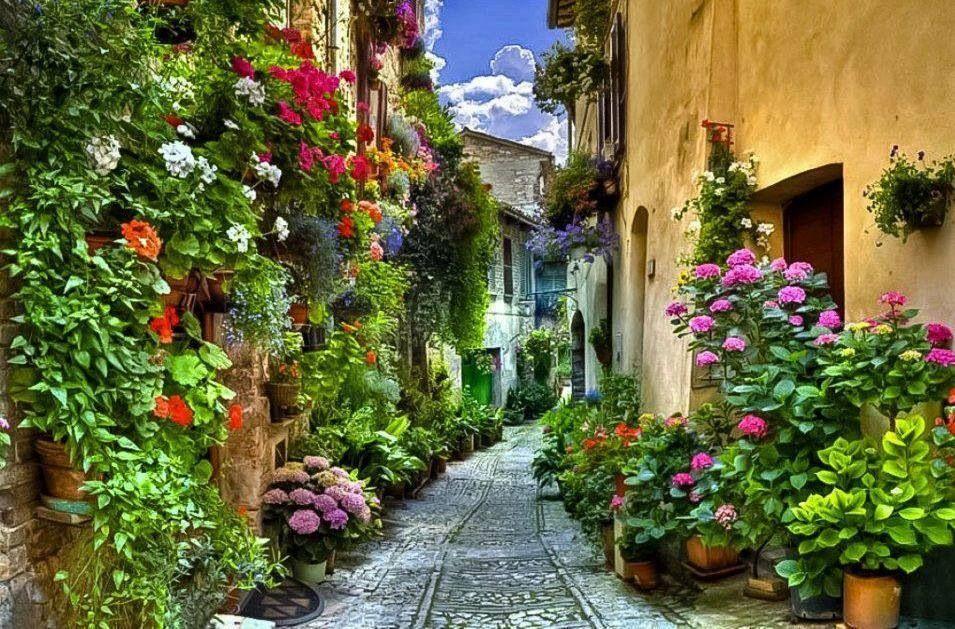 Breathtaking flower alley