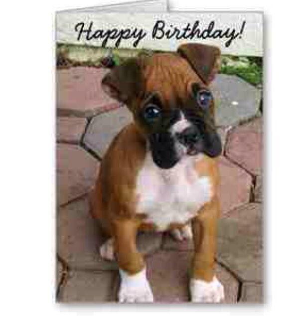 Boxer birthday :) | Birthday images ;) | Happy birthday ...