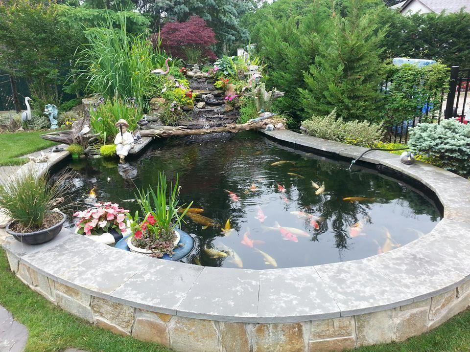 koi fish ponds ponds backyard fish pond gardens pond Fish Pond Fountain id=66415