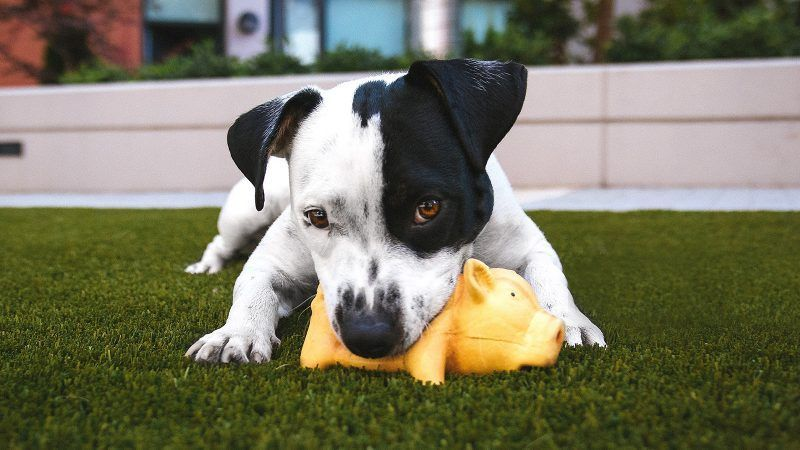 What to budget monthly if you a dog owner Puppy