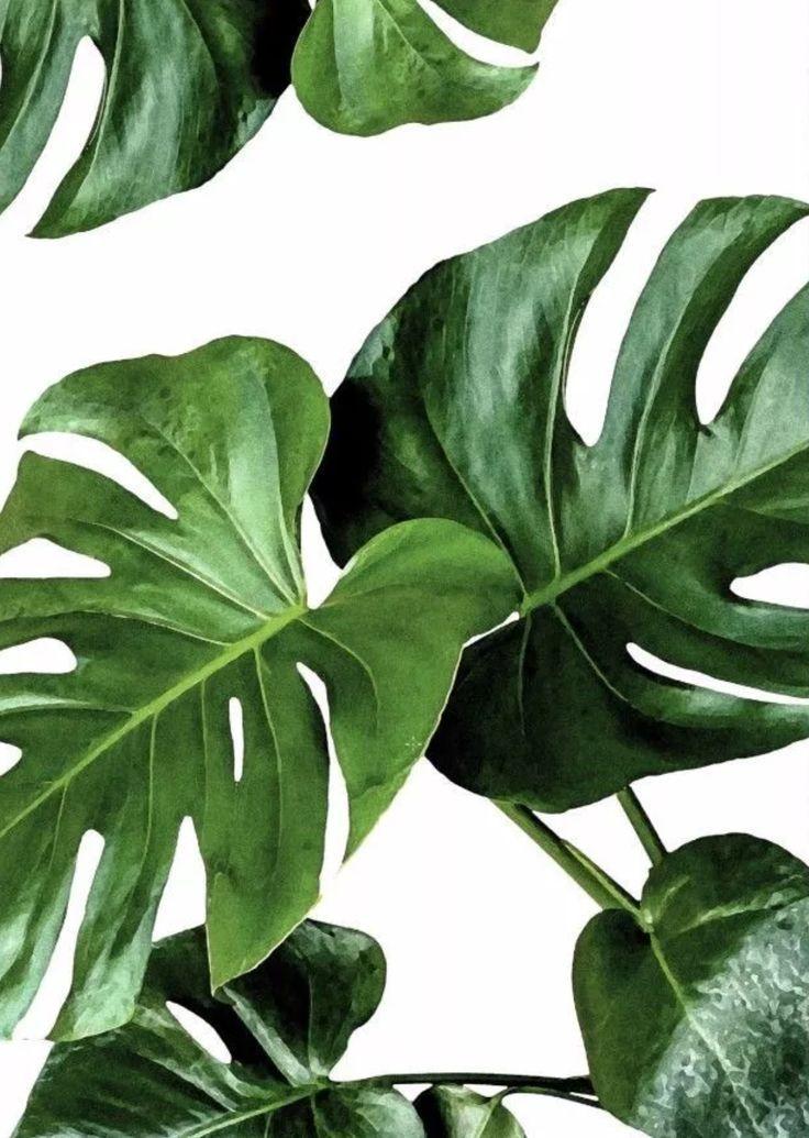 Plants watercolour iPhone wallpaper Plant wallpaper