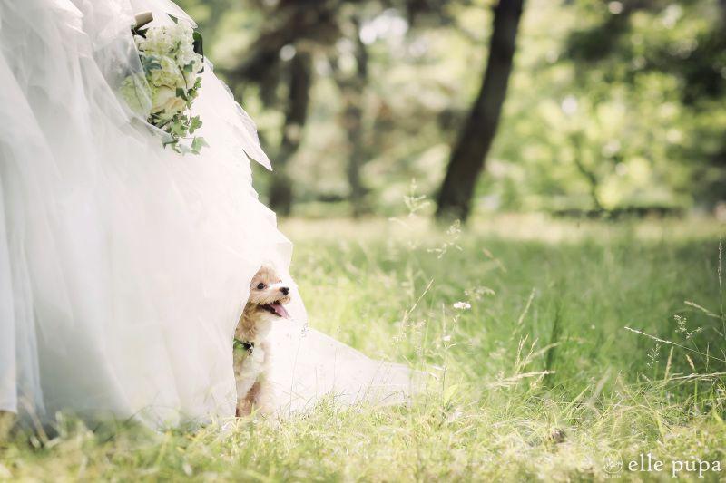 新郎新婦と犬の気持ち ウェディングフォト ウェディング 結婚式 ペット