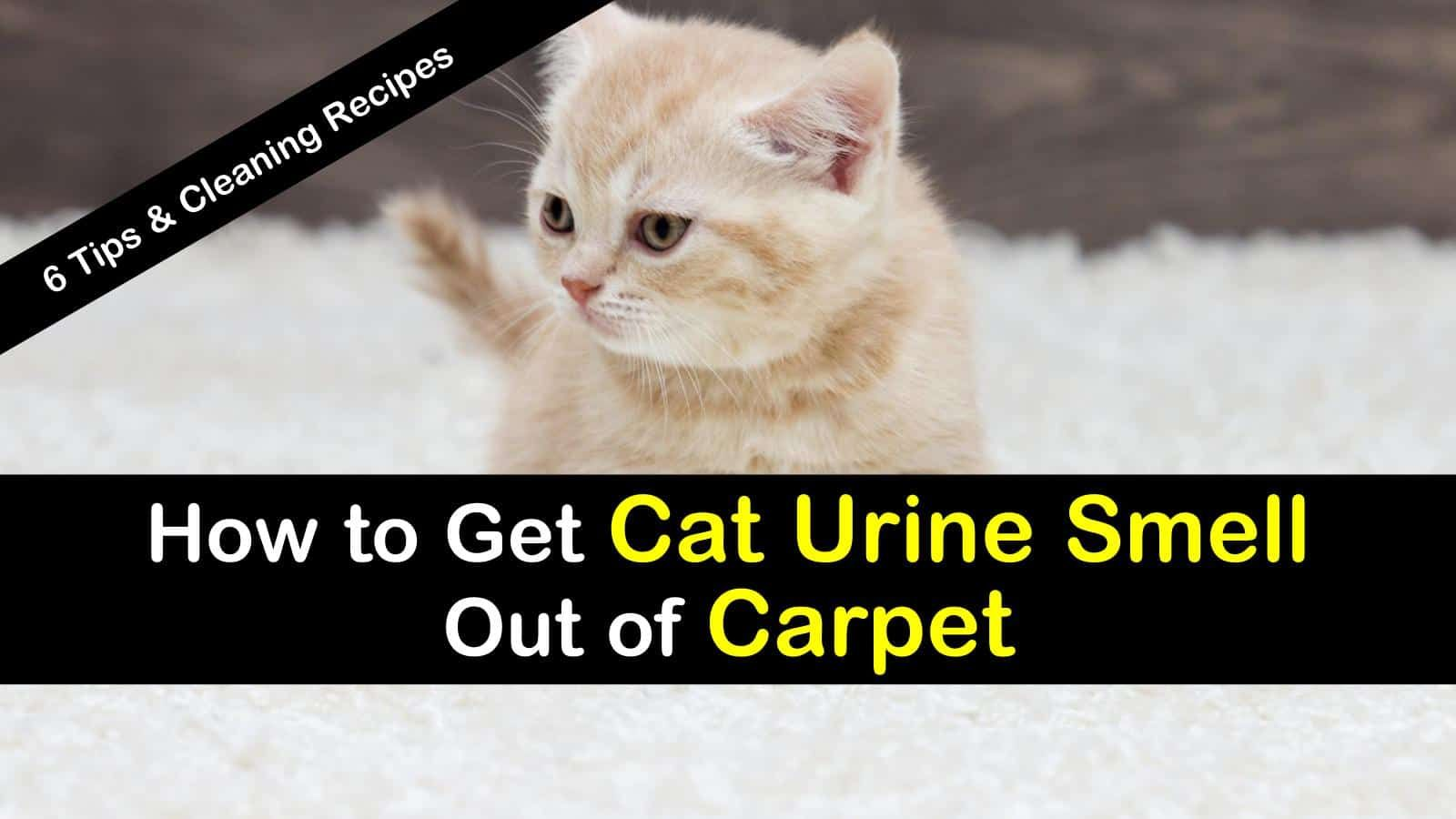 how to get urine smell out of couch fabric