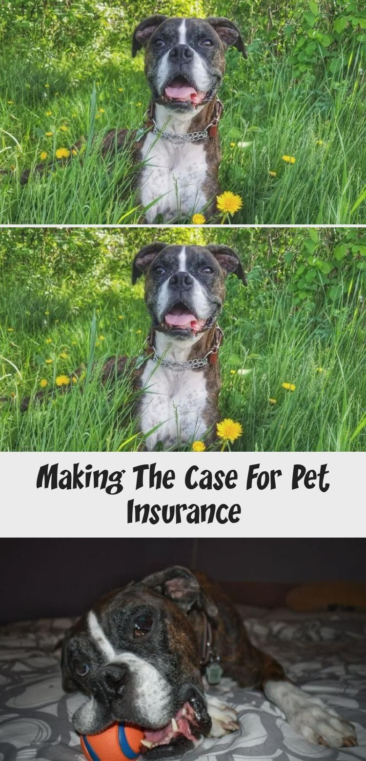 Making The Case For Pet In 2020 With Images Pet Insurance Sick Pets Pet Emergency