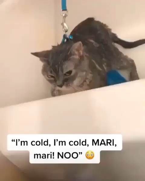 hes cold😹😻see more on my youtube, link in the ◾◾◾