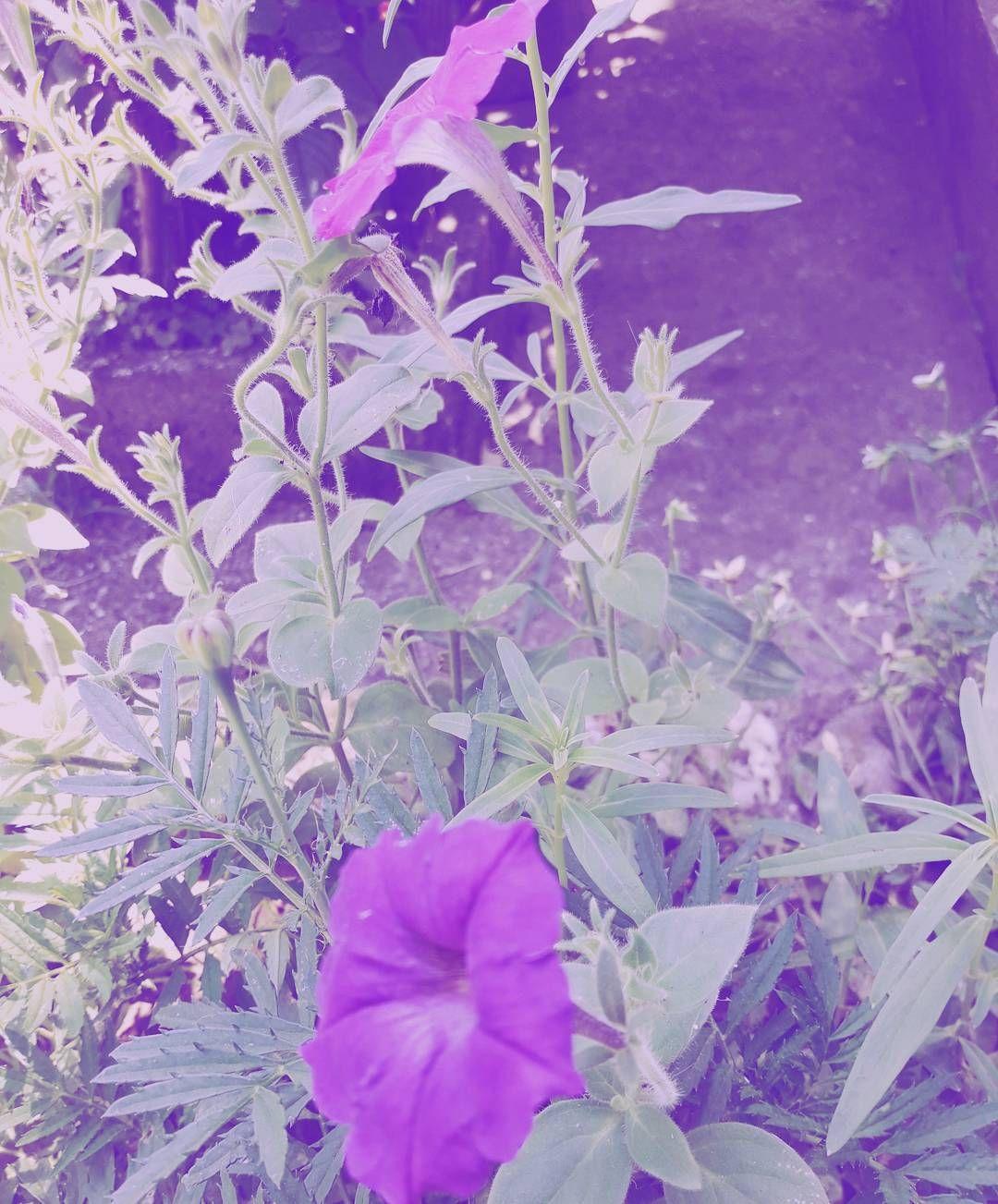 Pin By Socialdisfunction On V01l3t Purple Flowers