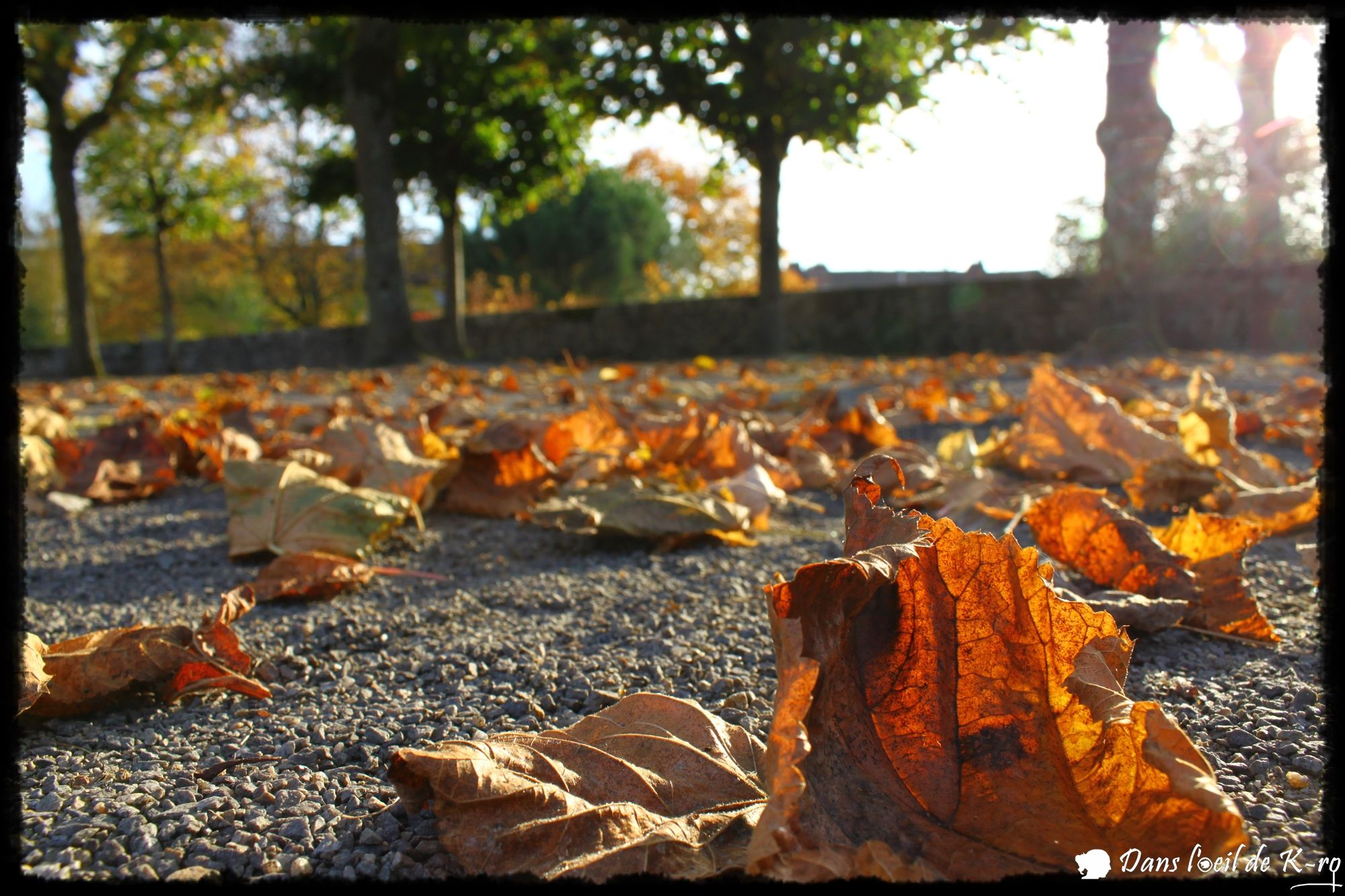 automne autumn feuilles leaves soleil sun dansloeildekro