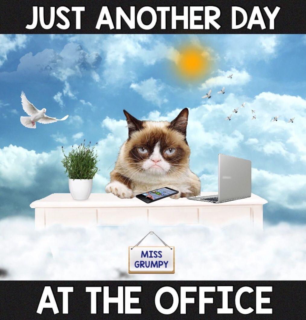 Grumpy Cat Day Funny Grumpy Cat Memes Grumpy Cat Grumpy Cat Meme