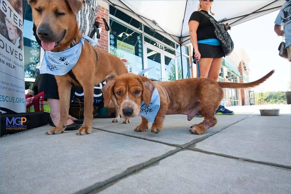 Pet Valu Alexandria 8 13 16 Dog Adoption Volunteer Adoption