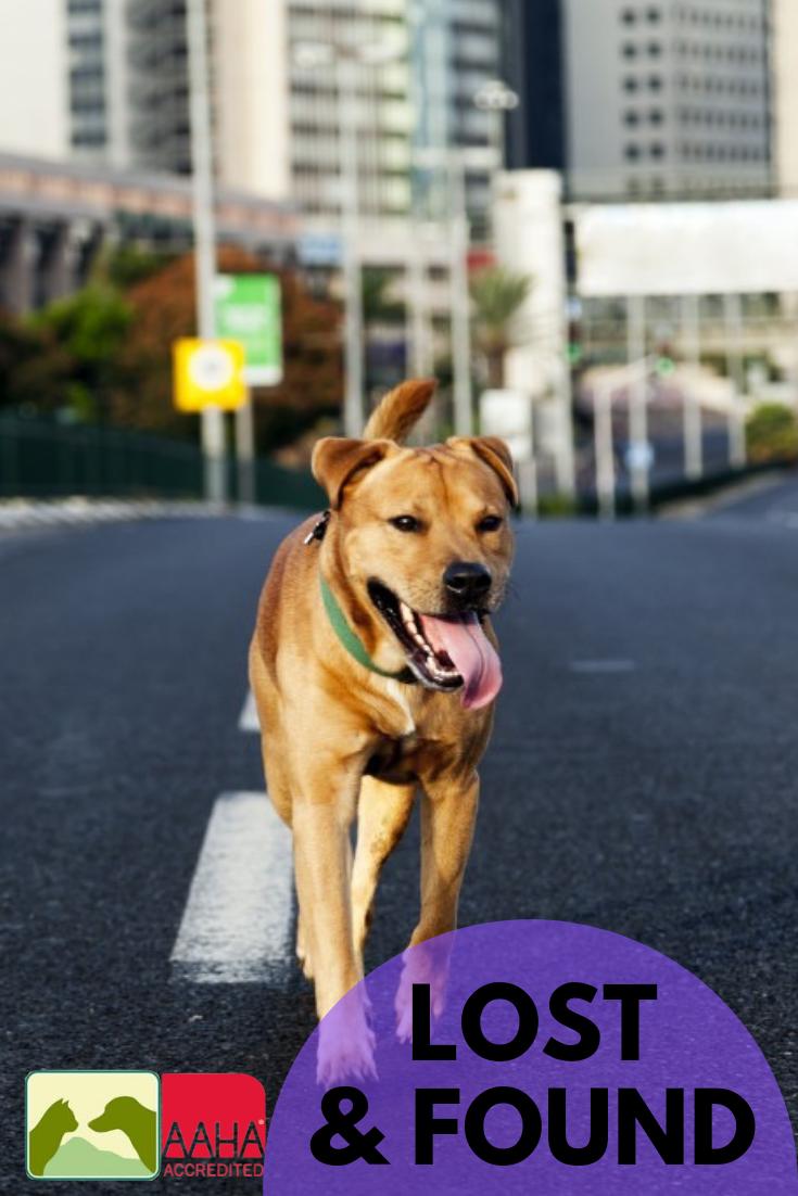 Home Veterinary Hospital Pets Animal Hospital