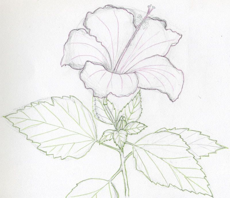 Easy pencil sketches flower drawings