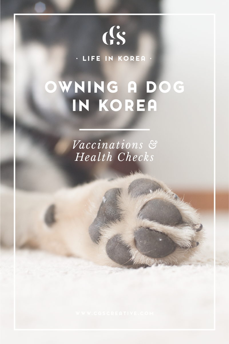 Owning A Dog In Korea - Rescuing a dog in Korea. Health Check Ups Vaccinations.The story of Shadow the Korean Jindo rescue pup