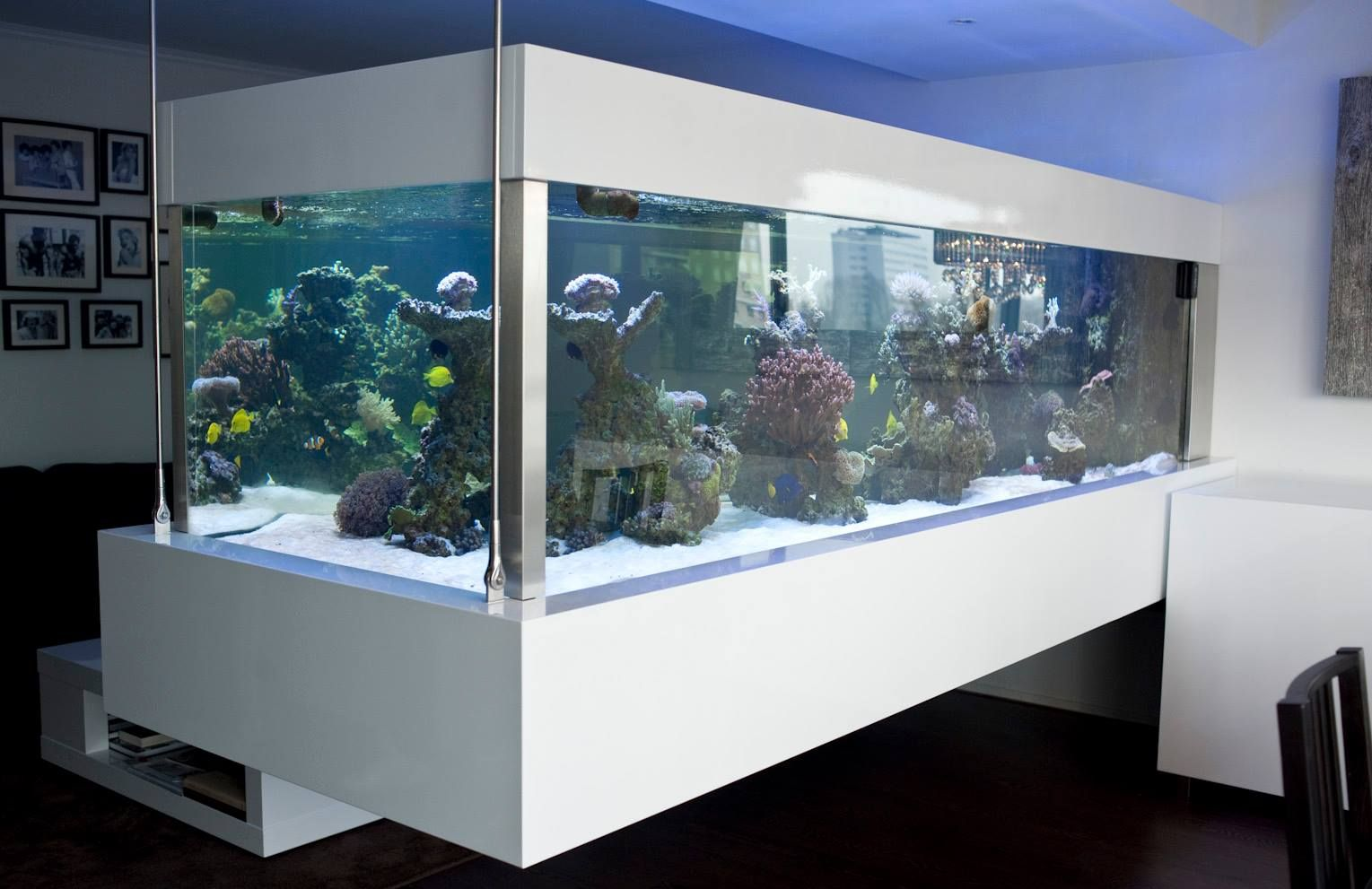 Cool Aquariums Cool Fish Tank Fish Tank Pinterest Fish Tanks And Aquariums