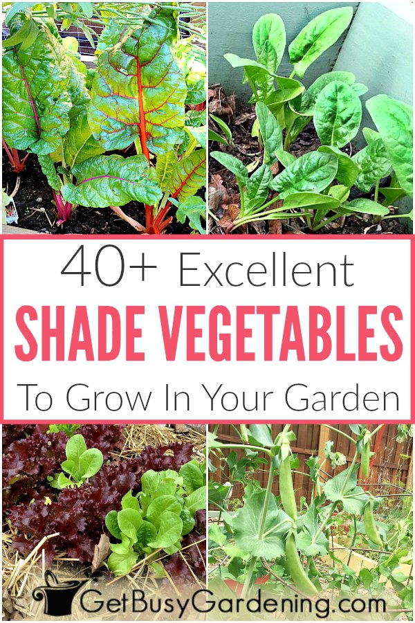 Photo of 40+ Vegetables That Grow In Shade