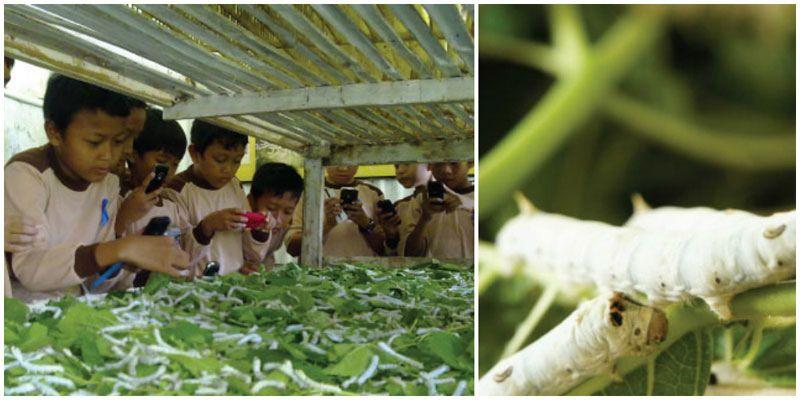 Learn all about silkworms at the Padepokan Dayang Sumbi | Bandung,  Silkworm, Vegetables