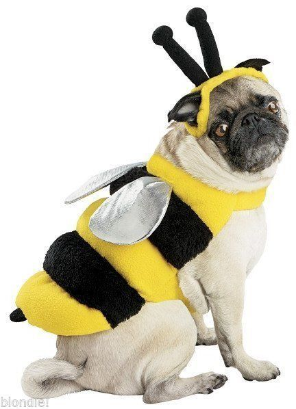 6107af47062f BUMBLE BEE BumbleBee Halloween Dog Pet Costume LARGE (B4)