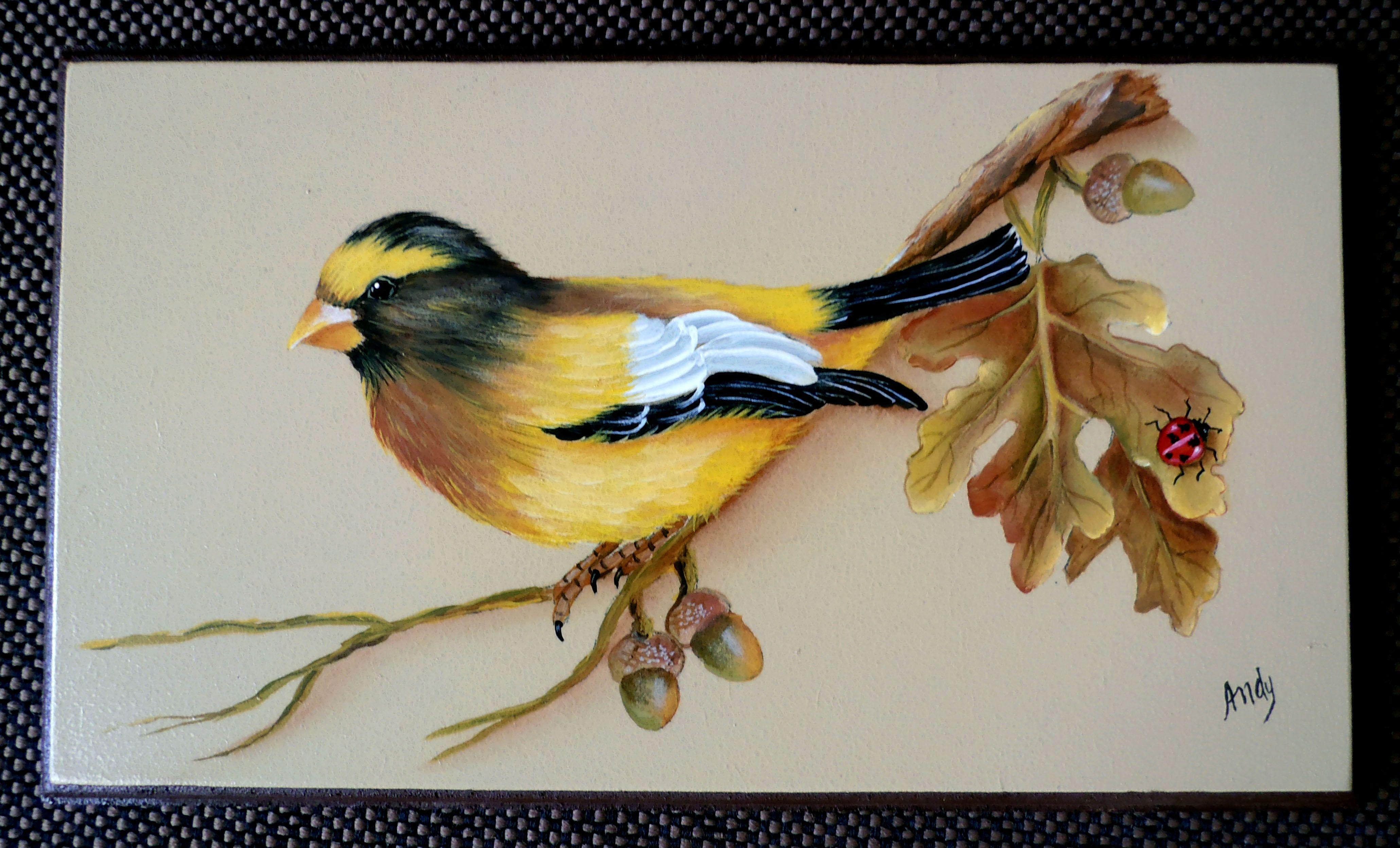 Pássaro americano - pintura de Mary Paiva (Andy) - Livro de Sherry Nelson.
