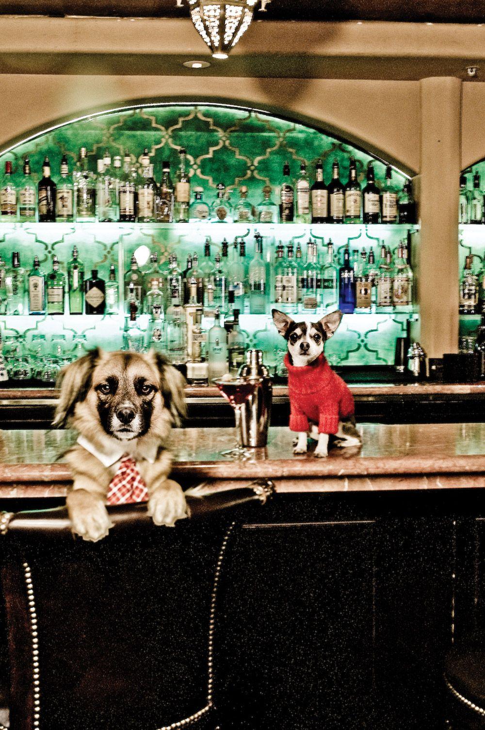 Dog Friendly Carmel Hotel Bed And Breakfast Inn Pet Lodging