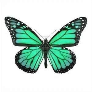 Imprimer le dessin en couleurs animaux insectes papillon num ro 158552 papillons - Papillon dessin couleur ...