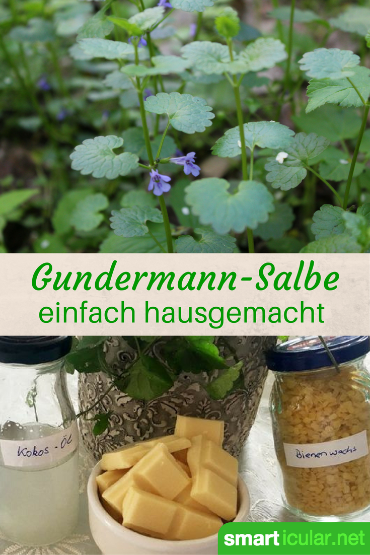 Photo of Gundermann-Heilsalbe für schlecht heilende Wunden